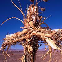 desert cross3