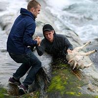 men-rescuing-lamb-2