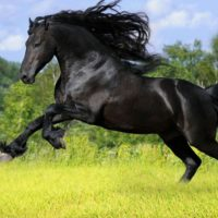 black_wild_horse-wide