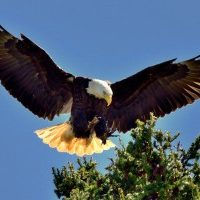 o-dc-police-eagle-nest-facebook-300x200